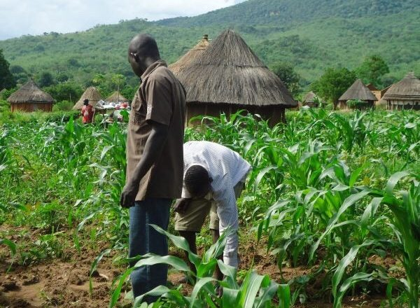 Farmers Seek FG's Support to Avert Food Crisis