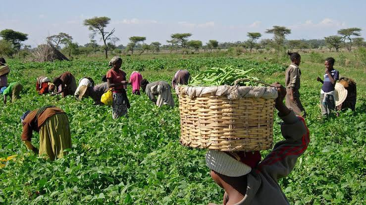 Shareholders urge bank to review sectoral allocation to agriculture