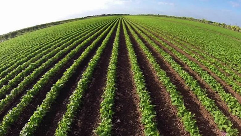 FG launches agriculture, jobs plan to mitigate COVID-19 impact