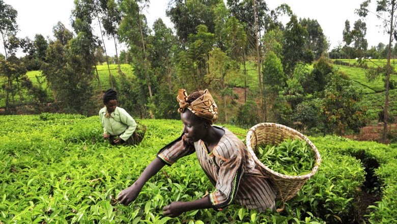 SWOFON, CSJ Group kick against Agric budget cut