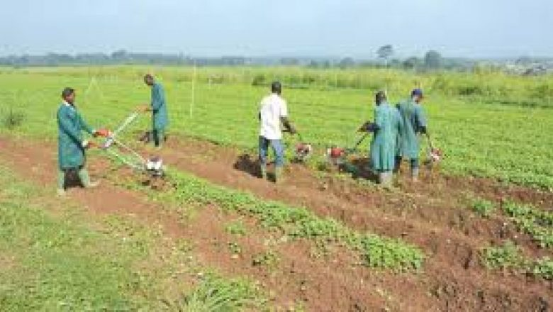 Farmers in 11 states to get fertilizer at N4,500