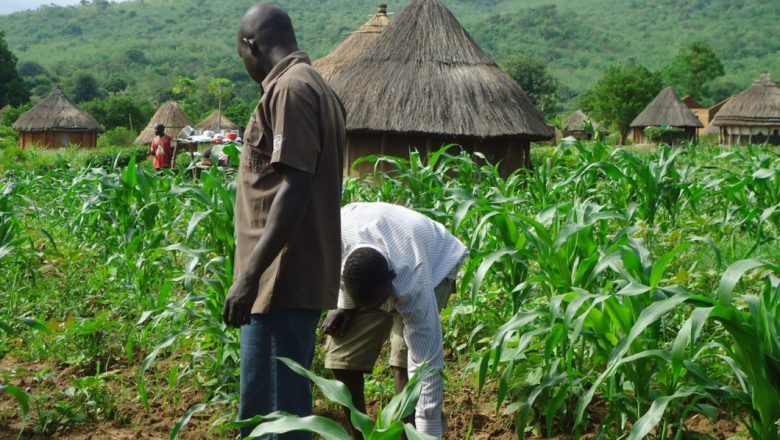 Smallholder farmers still lack access to insurance