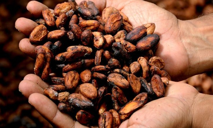 Why efforts by Côte d'Ivoire and Ghana to help cocoa farmers haven't worked